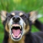 chien-dangereux-344x230